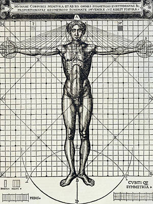 Proportionality Wall Art - Drawing - Ideal Proportions Based On The Human Body by Cesare di Lorenzo Cesariano