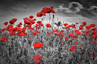 Angiosperm Photograph - Idyllic Field Of Poppies Colorkey by Melanie Viola