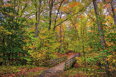 Photograph - Idyllic Wooden Walking Bridge In A Forest During Autumn With Fal by Patrick Wolf