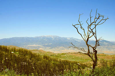 Photograph - Idyllwild Mountain View With Dead Tree by Ben and Raisa Gertsberg