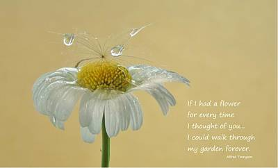 Photograph - If I Had A Flower Quote by Barbara St Jean