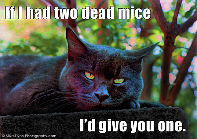 Photograph - If I Had Two Dead Mice by Mike Flynn