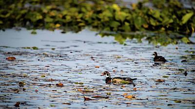 Photograph - If It Looks Like A Wood Duck by Onyonet  Photo Studios