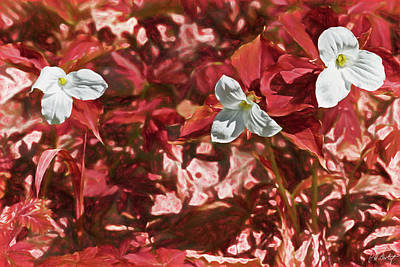 Trillium S Photograph - If The Forest Was Red by Phill Doherty