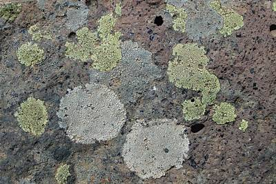 Photograph - Igneous - Lichens On Volcanic Rock by Robert Schaelike