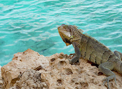 Photograph - Iguana 2 by Jean Noren