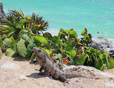 Art Print featuring the photograph Iguana At Tulum by Roupen  Baker