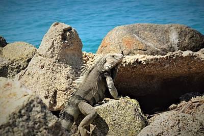 Pyrography - Iguana  by Gary Smith