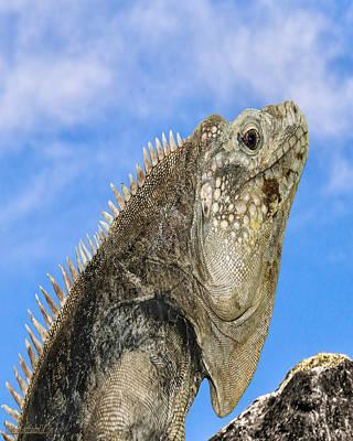 Photograph - Iguana Nature Wear by LeeAnn McLaneGoetz McLaneGoetzStudioLLCcom