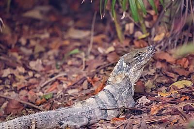 Photograph - Iguana by Peter Lakomy