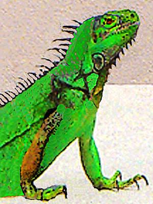 Photograph - Iguana Portrait by Merton Allen