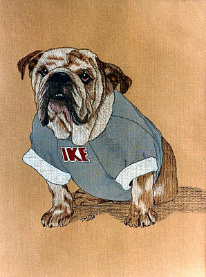 Drawing - Ike The Bulldog by Terri Mills