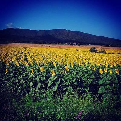 Sunflowers Ocean Original