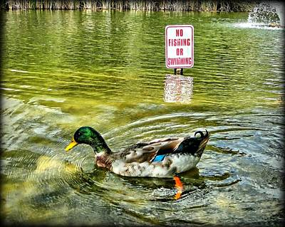 Photograph - Illegal Duck by Dale Paul
