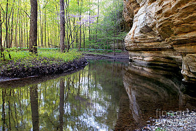 Art Print featuring the photograph Illinois Canyon In Spring by Paula Guttilla