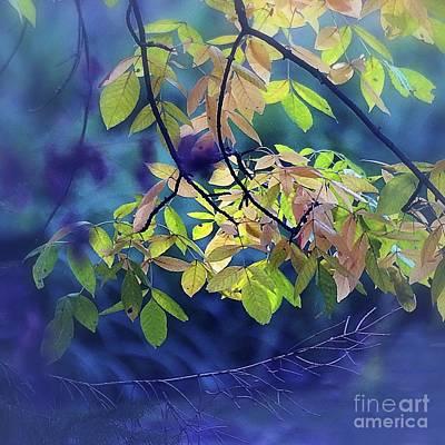 Photograph - Illuminated by Aimelle