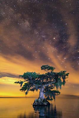 Photograph - Illuminated Cypress by Stefan Mazzola