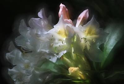 Illuminated Rhododendrons Art Print