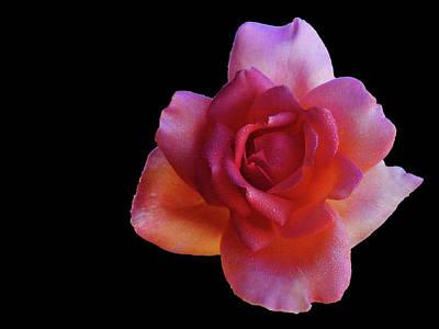 Photograph - Illuminated Rose by Mark Blauhoefer