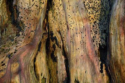 Illuminated Stump 02 Art Print by Bruce Gourley