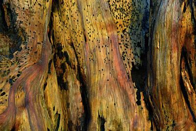 Illuminated Stump Art Print by Bruce Gourley