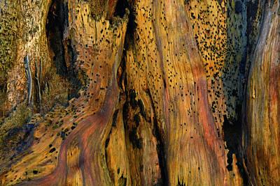 Illuminated Stump With Peeking Crab Art Print by Bruce Gourley