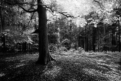 Photograph - Illumination by Alexander Kunz