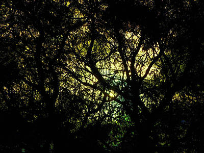 Photograph - Illumined by Mark Blauhoefer