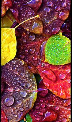 Illuminous Colour Art Print by Sheila Mcdonald