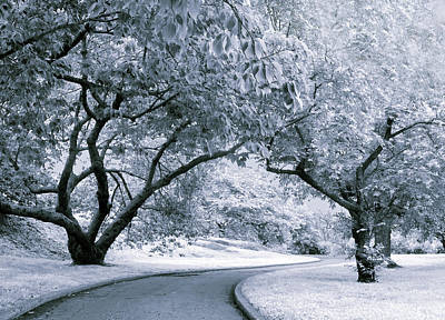 Photograph - Illusion Of Winter by Jessica Jenney