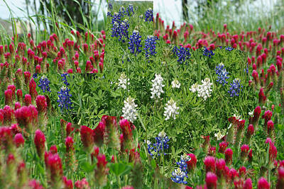 Crimson Clover Photograph - Illusions Of Texas In Red White Blue by Robyn Stacey