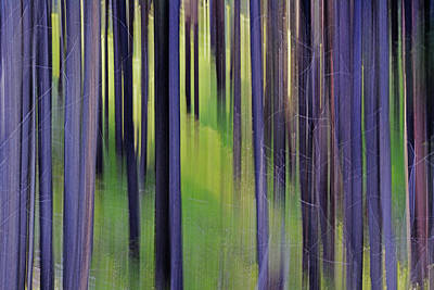 Popstar And Musician Paintings Royalty Free Images - Illusions of the Forest-Morning Sun Royalty-Free Image by Whispering Peaks Photography