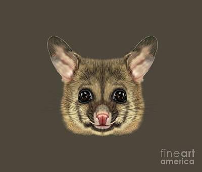 Brushtail Digital Art - Illustrated Portrait Of Common Brushtail Possum.  by Altay Savrukov