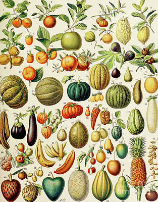 Illustration Of Fruit Art Print by Adolphe Philippe Millot