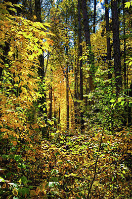 Photograph - Iluminated Forest by John M Bailey