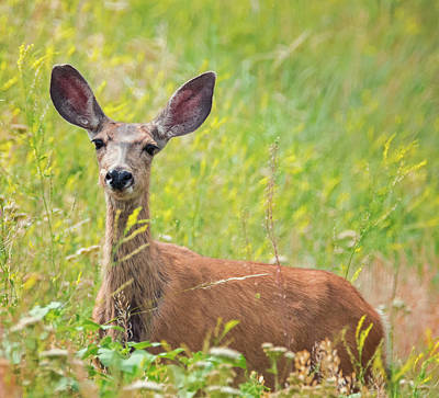 Photograph - I'm All Ears by Loree Johnson