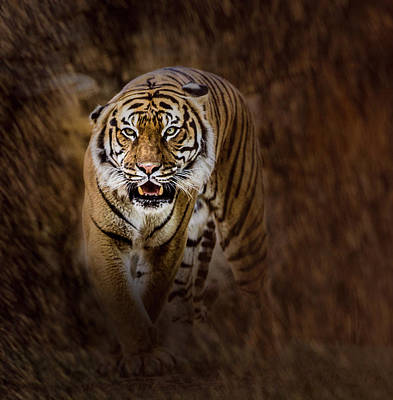 Photograph - I'm Coming For You by Annette Hugen