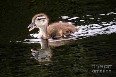 Photograph - I'm Cumin Mamma by Frank Townsley