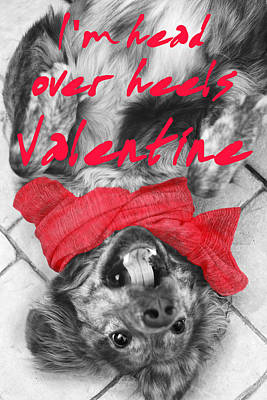 Photograph - I'm Head Over Heels Valentine by Suzanne Powers