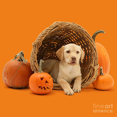 Photograph - I'm Just Halloween Fun by Warren Photographic