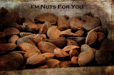 Photograph - Im Nuts For You by Lesa Fine