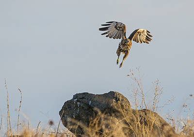 Red Tail Hawk Photograph - I'm Outta Here by Loree Johnson