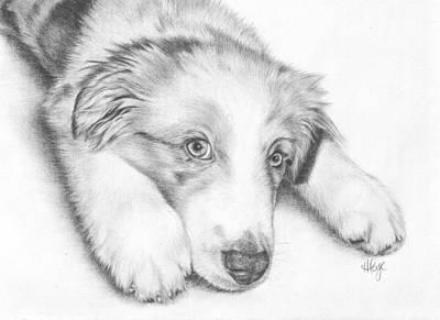 I'm Sorry - Australian Shepherd Puppy Print by Heather Page