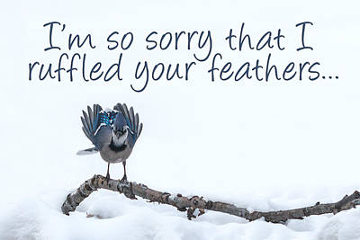 Photograph - I'm Sorry Blue Jay Card by Patti Deters