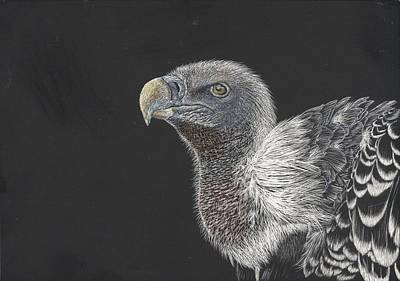 Vulture Mixed Media - I'm Watching You by Maria Ferreira