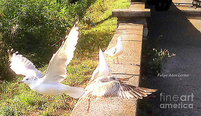 Rights Managed Images Photograph - Image Included In Queen The Novel - Birds On Battery Park Wall Vermont Horizontal Crop by Felipe Adan Lerma