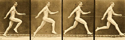 Image Sequence From Animal Locomotion Series Print by Eadweard Muybridge