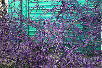 Photograph - Image Study Purple And Turquoise by Donna L Munro