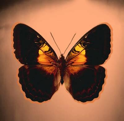 Painting - Image11 by Belinda Threeths