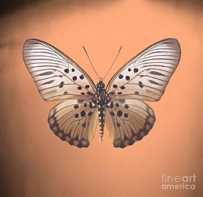 Painting - Image2 by Belinda Threeths